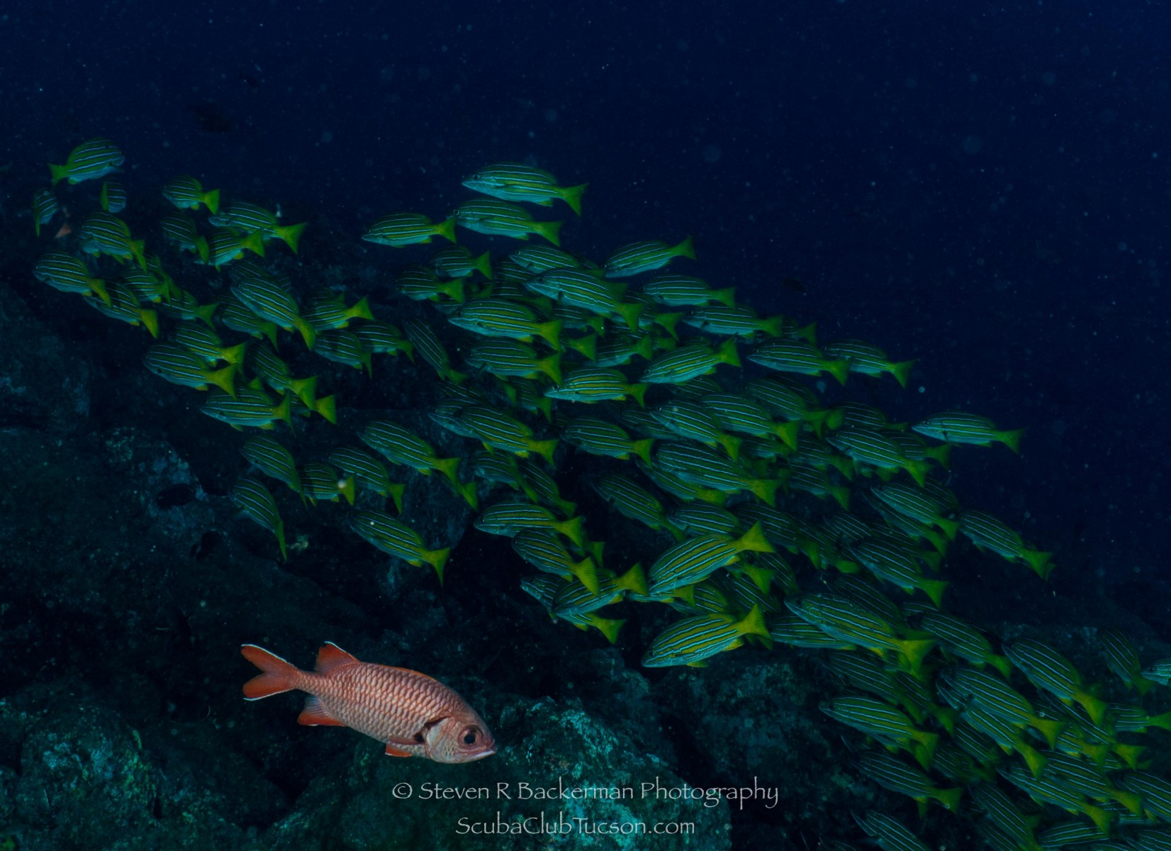Bigscale Solidierfish and School of Blue-and-Gold Snappers-0564