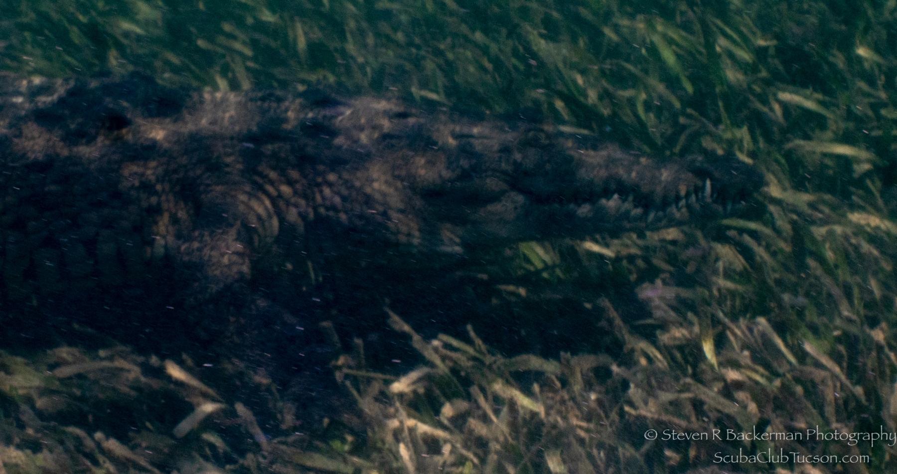 Croc-4568