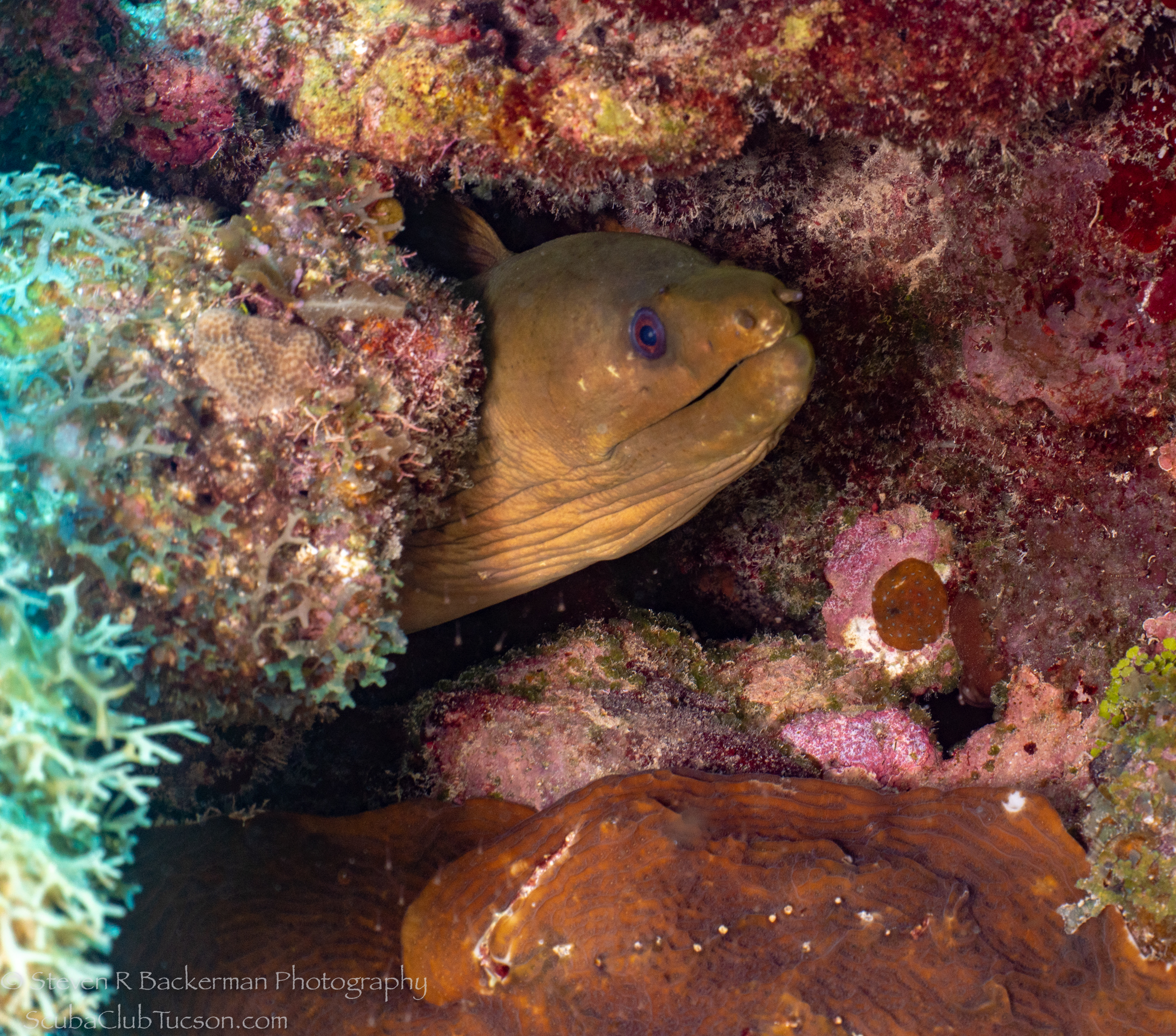 Green-Moray-Eel-4232