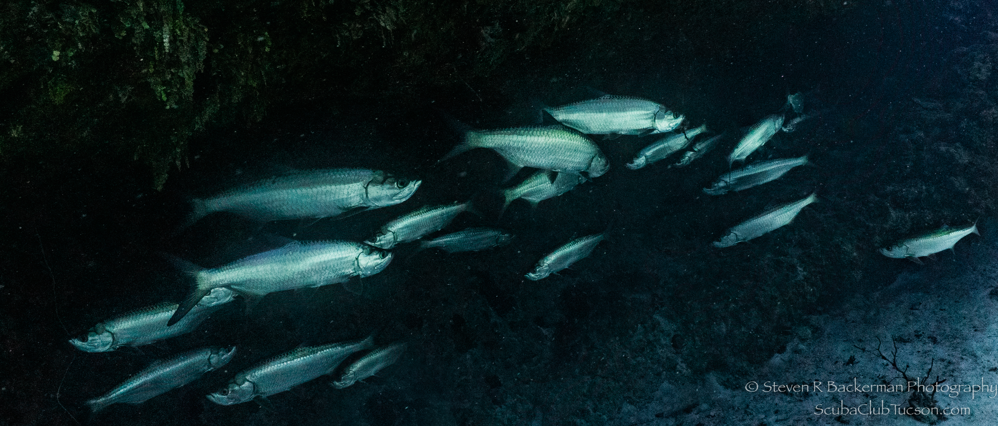 School-of-Tarpon-4626