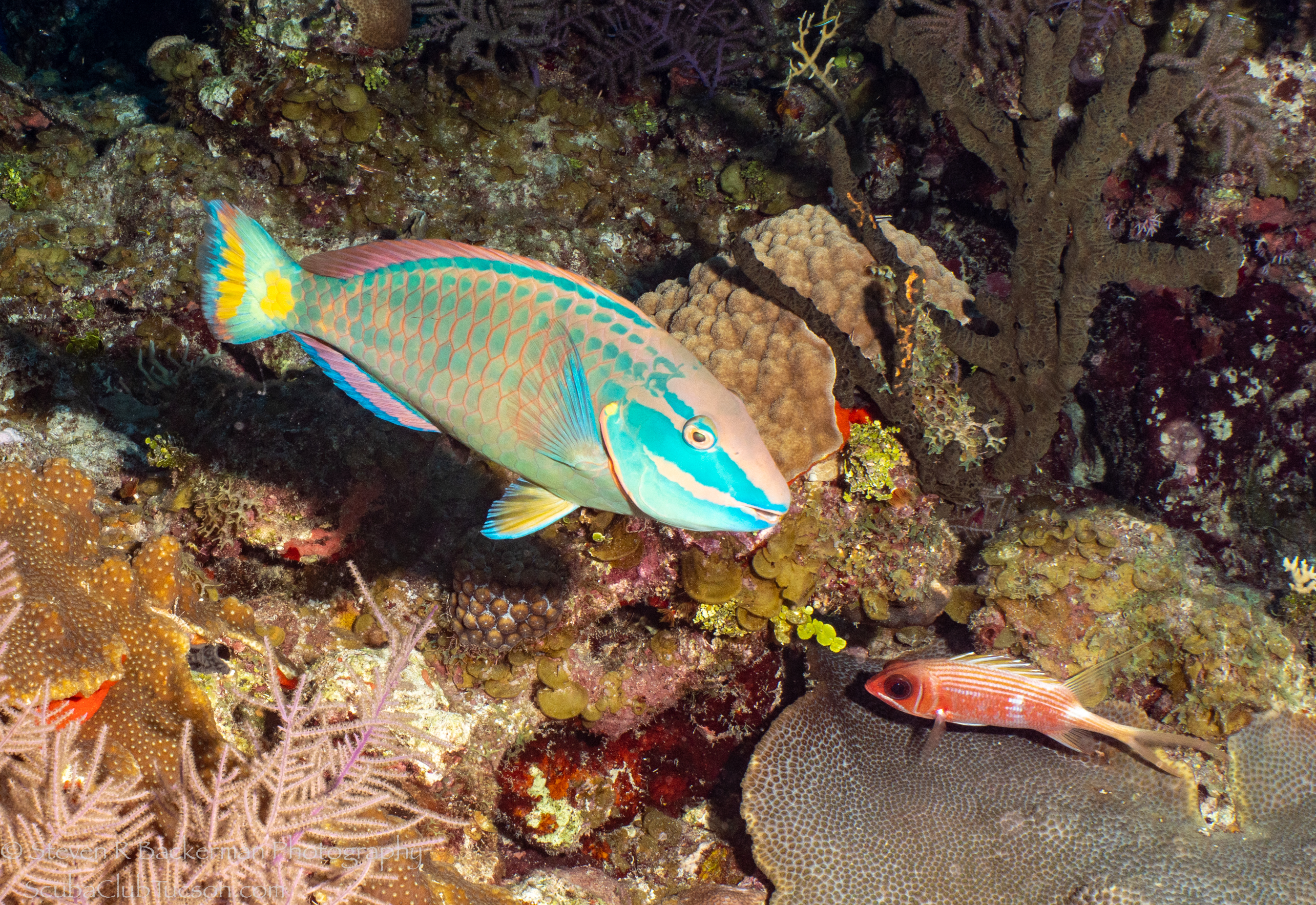 Stoplight-Parrotfish-and-Longspine-Squirrelfish-4407