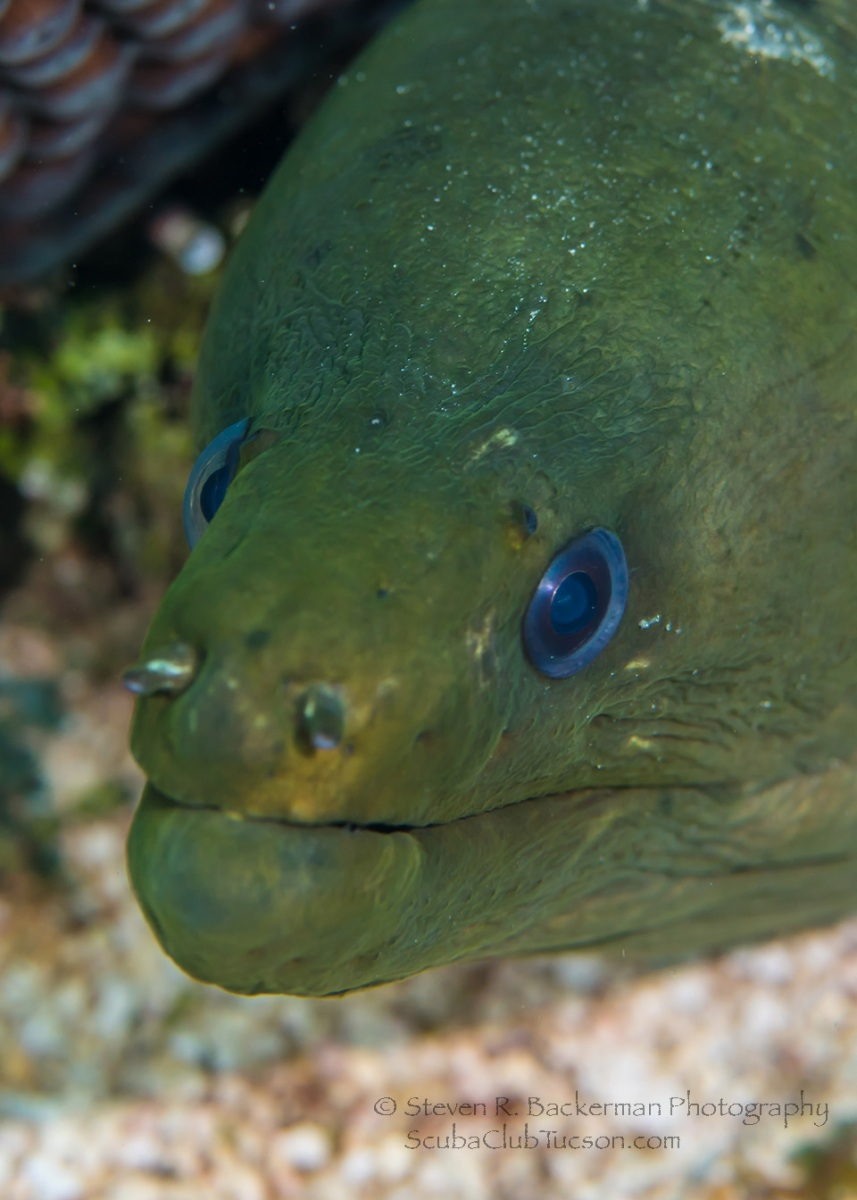 Green Moray 2-4735 Website