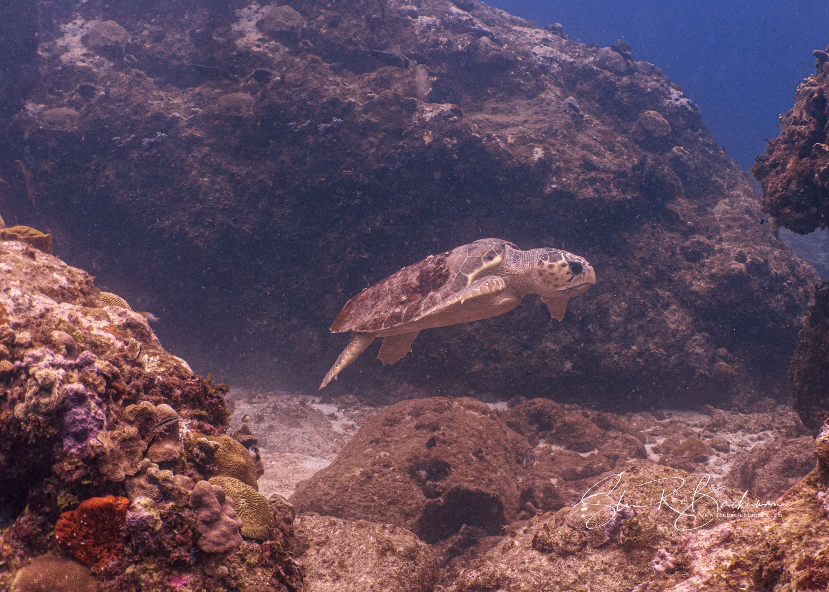 Loggerhead-Sea-Turtle-5193