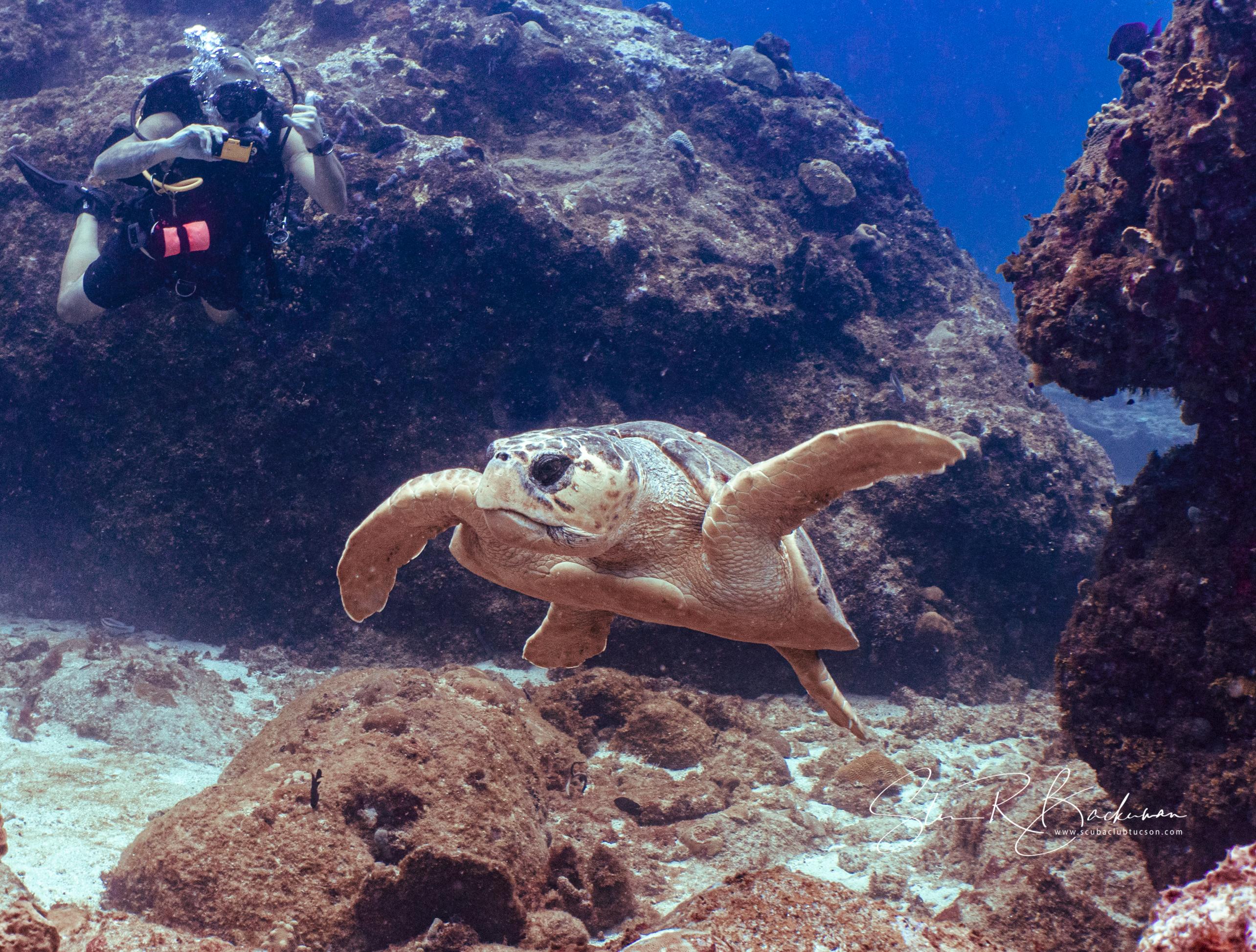 Loggerhead-Sea-Turtle-5195
