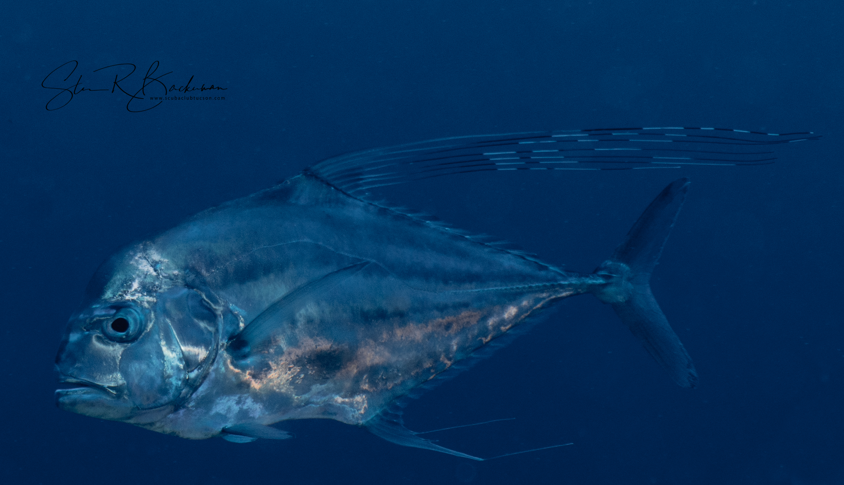 Young-Adult-African-Pompano-5157