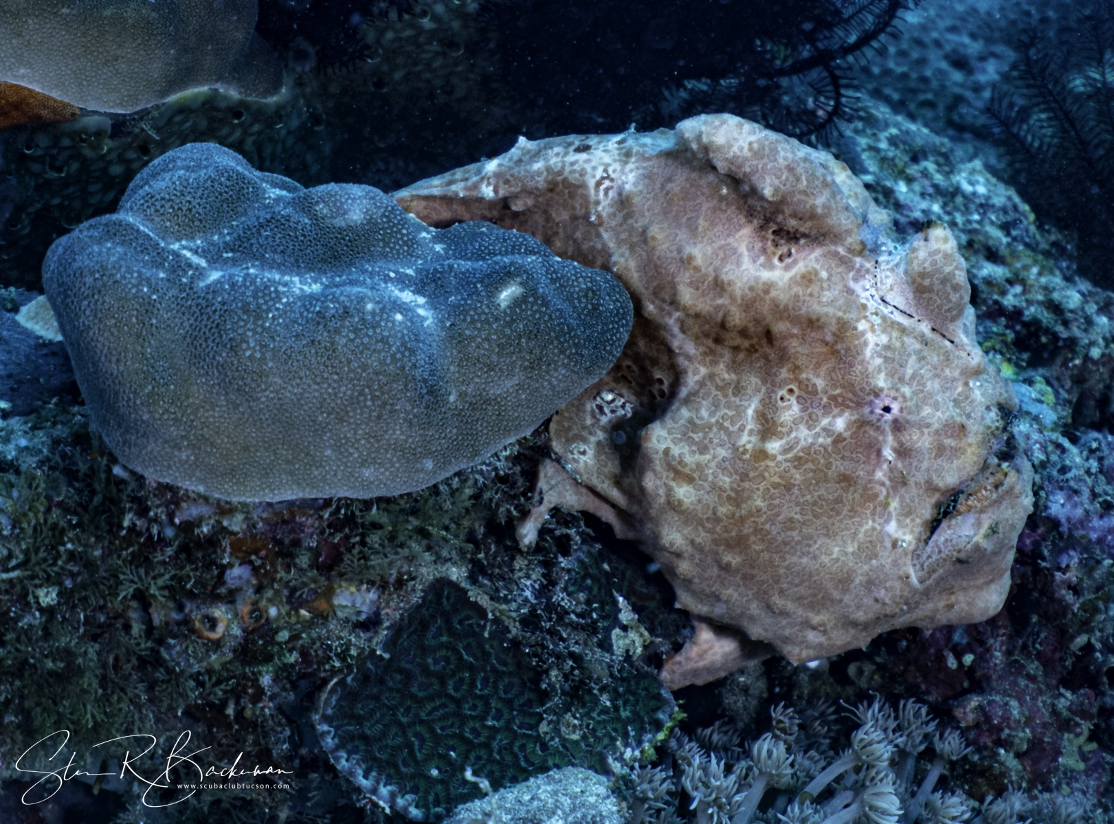 Giant-Frogfish